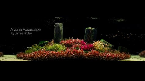 the green machine aquascape arizona aquascape by james findley 1600 litre the making of youtube