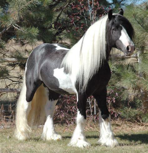 nice hourse hores horses photo 10344593 fanpop