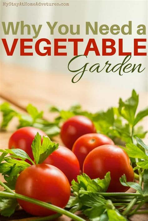 8 Never Thought Of Reasons You Need A Vegetable Garden What Do You Need To Start A Vegetable Garden