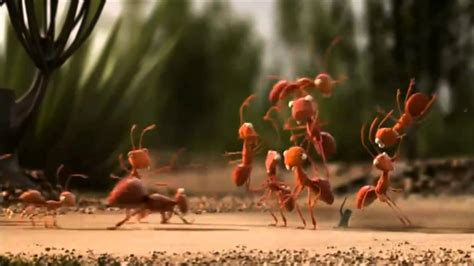 Is Mba All About Team Work by Ants Teamwork Mba