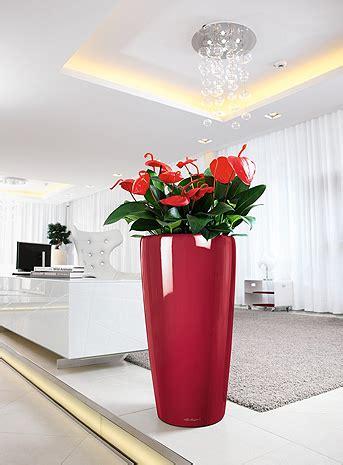 vasi alti piante benessere abitare homegate ch