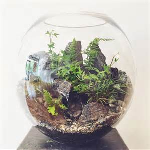 forest world terrarium extra large bioattic specialty plants