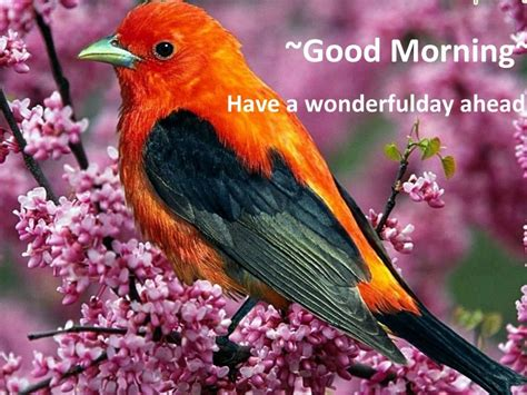 good morning wishes with birds pictures images