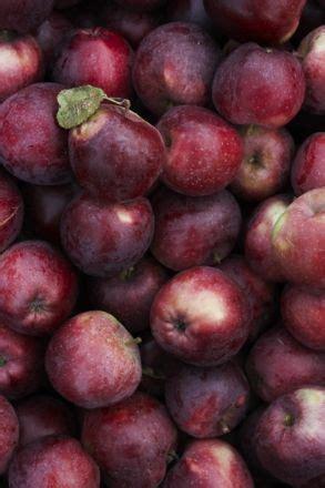 Maroon The Things burgundy apples everything burgundy