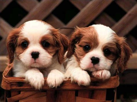 puppies and more puppies and more images puppies hd wallpaper and background photos 31104113