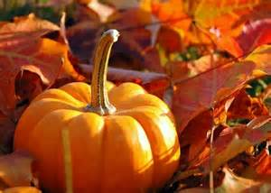 gallery images of fall pumpkins