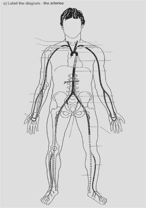 veins and arteries diagram major arteries and veins diagram