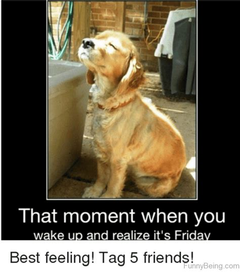 friday meme 54 friday meme pictures that show we all live for the weekend