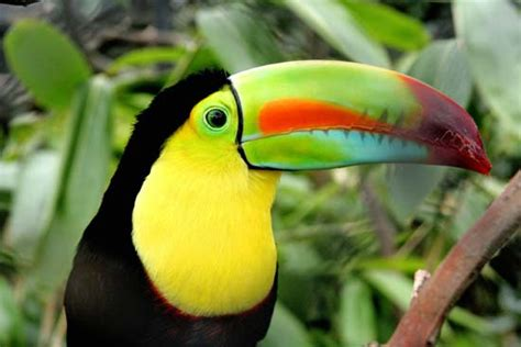 the not so complete birds afoul of america books south america facts land economy animal