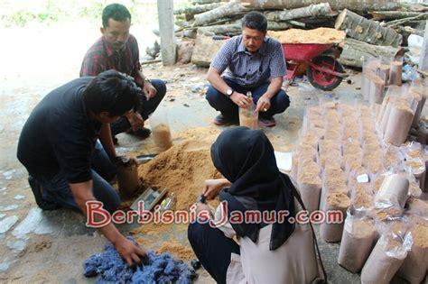 Bibit Jamur Tiram Semarang budidaya jamur tiram bisa dirintis di berbagai daerah