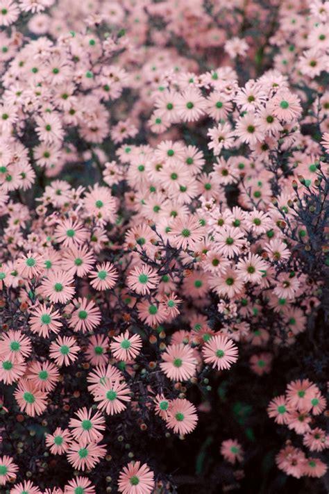 imagenes tumblr margaritas flores exoticas tumblr