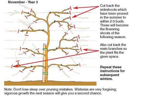 pruning wisteria november year 3 garden seeds and plants pinterest
