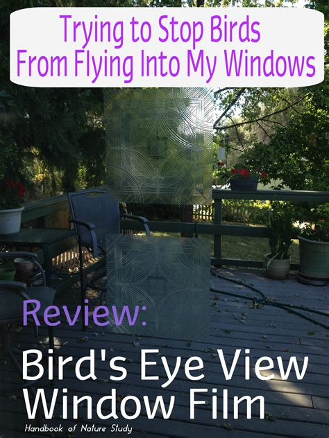 bird s eye view window decals saving birds