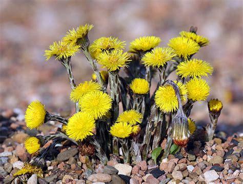 Promo Arizona Drink Jar Kran Lucky Bird 5 Liter растения пионеры неизвестное об известном интересные факты о растениях и животных