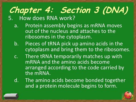 section 3 dna rna and protein chapter 4 section 3 dna