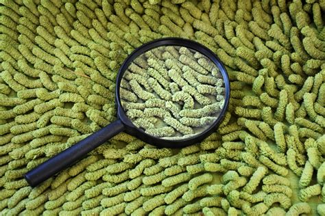 best rugs for allergy sufferers carpet allergies images carpet for allergy sufferers images wool carpet allergies images new