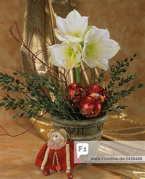 wann feiern russen weihnachten blumenstrau 223 mit wei 223 er amaryllis lizenzfreies bild