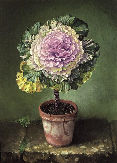 ornamental cabbage buy jose escofet website for artist jose escofet past work
