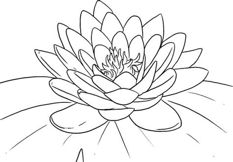 Lotus Flower Coloring Page free printable lotus coloring pages for