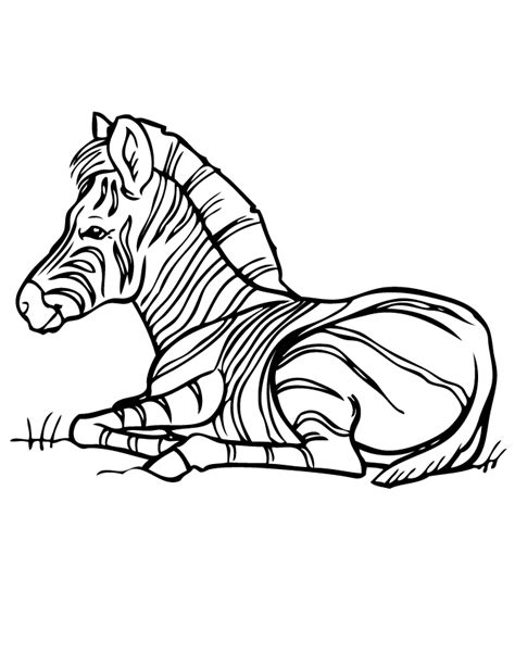 printable zebra print outline free coloring pages of outline of zebra