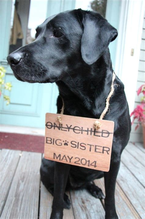 baby announcements with dogs best 25 pregnancy announcement ideas on baby announcement with dogs
