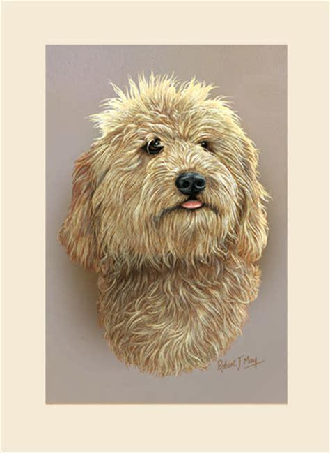 basenji puppy price range basenji price range breeds picture