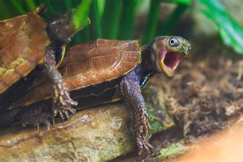 Wrong Hole Turtle Meme - wrong hole funny