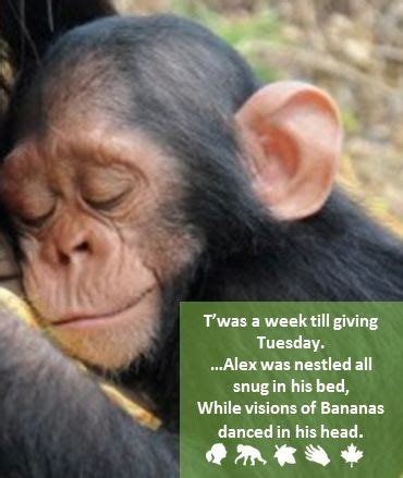 jane goodall biography in spanish 17 best images about jane goodall on pinterest tanzania