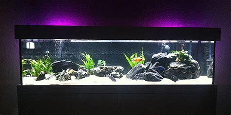 terrarium beleuchtung led aquarium schweiz led beleuchtung terrarium