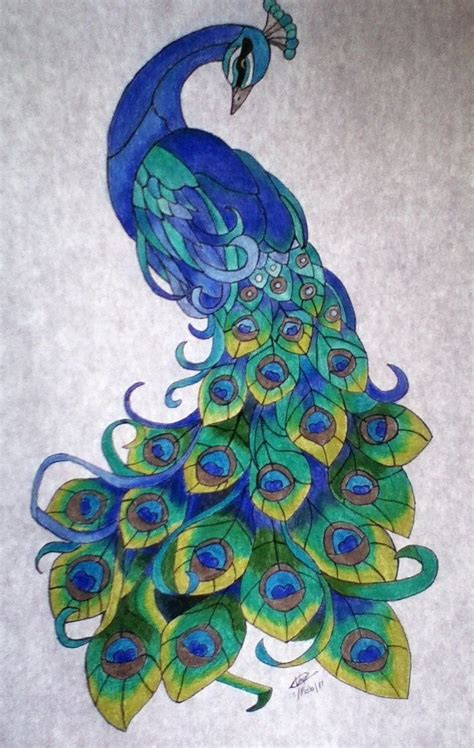 peacocks tattoo peacock drawings yahoo image search results cards