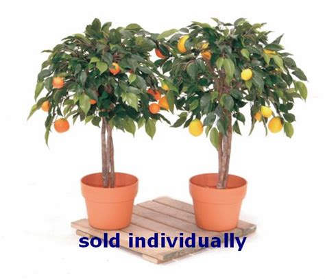 mini fruit trees artificial mini fruit tree just artificial
