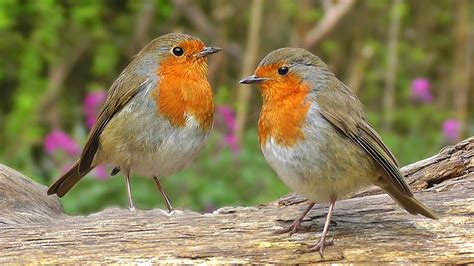top 28 why do birds chirp at 4am juvenile female