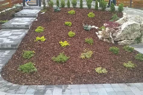 piante tappezzanti fiorite piante tappezzanti mondoverde belluno