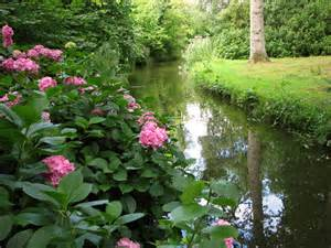Fairhaven Garden by Hydrangea In Fairhaven Water Garden C Simak