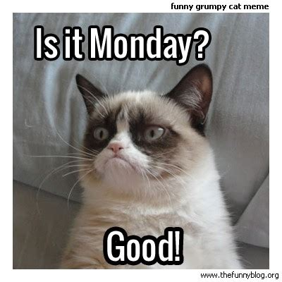 Good Cat Meme - is it monday cat meme cat planet cat planet