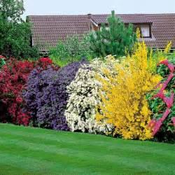 la haie fleurie id 233 es cr 233 atives pour l ext 233 rieur