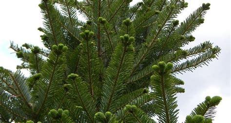 piante da giardino alto fusto alberi alto fusto alberi alberi con fusto alto