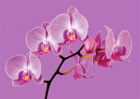 color of the year 2014 wshg net pantone color of the year 2014 radiant orchid