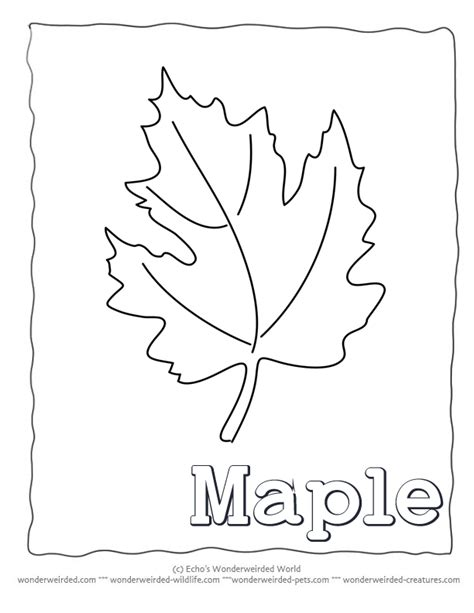 printable maple leaves coloring pages maple leaf template printable az coloring pages