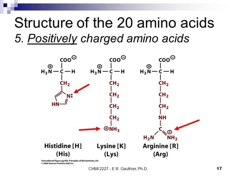 diagram of amino acid amino acids structure general chemical properties ppt