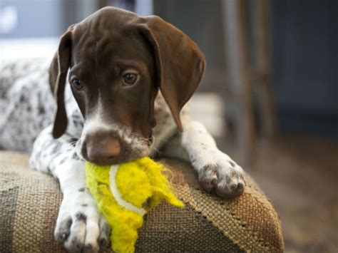 are safe for dogs are tennis balls safe for dogs pet friendly