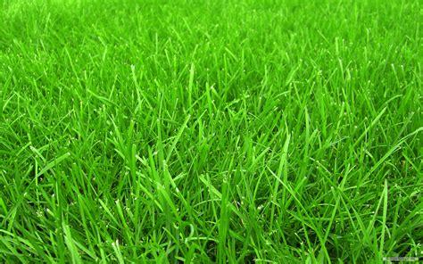 wallpaper of green grass grass backgrounds wallpaper 1920x1200 80776