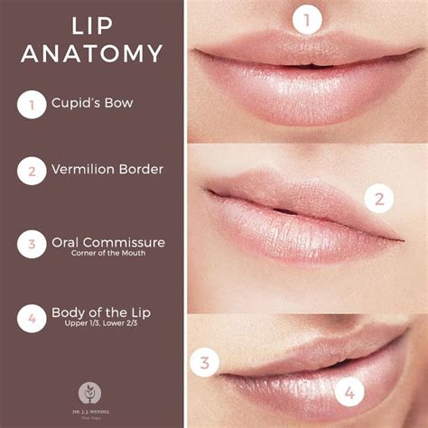 Augmentation Fill by 25 Best Ideas About Lip Augmentation On Lip