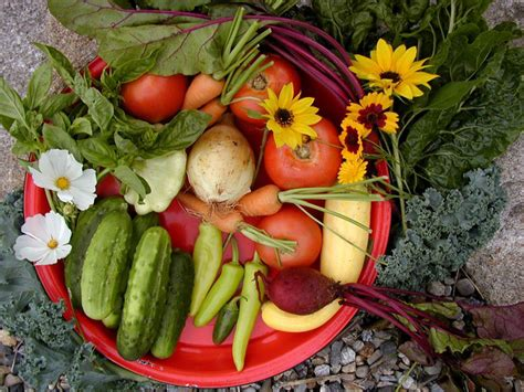fall vegetables maine home garden news september 2016 cooperative extension garden yard of