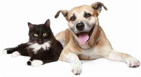 Helpless Dogs And Cats Are For Your Help by Municipio De Caic 243 Vai Licitar 1 Mil Castra 231 245 Es De C 227 Es E