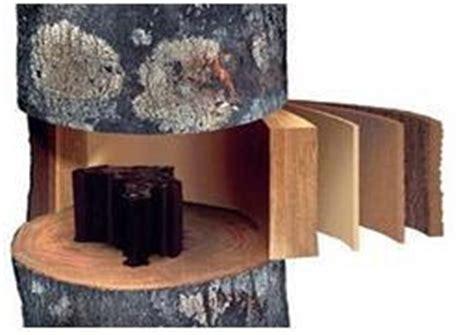 Pohon Kayu Cendana Wangi Ntt 3 Bibit bisnis gaharu terpercaya mengenal gaharu lebih dekat