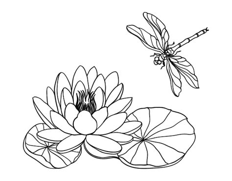 disegni fiore di loto disegno di fiore di loto da colorare acolore