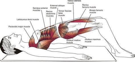 shoulder bridge prep puente de hombros workout look at chris d elia and curls