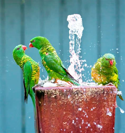 bathing your parrot wishforpets