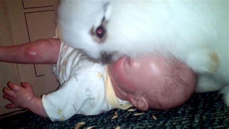 Baby Bunnies In Backyard Newborn Bunnies Www Imgkid Com The Image Kid Has It